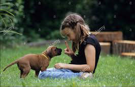 So you got a puppy!!